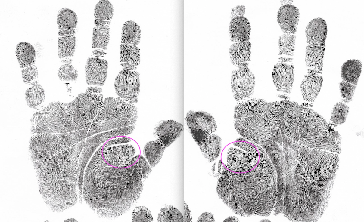 Palm Reading Archives - American Academy of Hand Analysis
